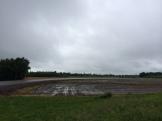 Dark skies and flooded crops.