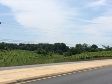 There are several wineries in the Leesburg area. This one's right off Route 15.