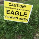 Yup, we've got bald eagles. And we've got bald eagle watchers, too, you betcha.