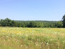 One of the nicest things about country roads is the abundance of wildflowers, and seeing how the population changes as I move west.