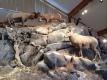 Big Horn Sheep Interpretive Center.