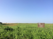Missouri's put aside prairie, and I'll be riding through the Flint Hills in Kansas, one of the few places natural prairie exists.