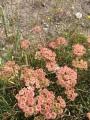 Blushing flowers.
